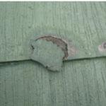 コロニアル屋根 基材の劣化