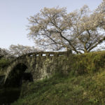 美里町大窪橋の桜